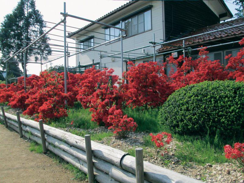 ノトキリシマガーデン(広江)