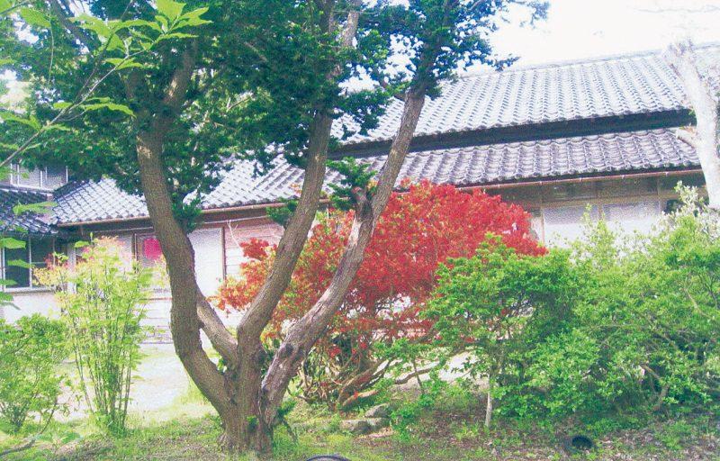 浄福寺 雑木林